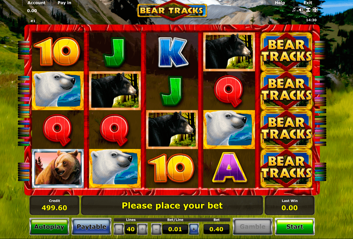bear tracks novomatic spielautomaten
